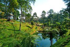 Serunya Menjelajah Kebun Teh Pagilaran Batang