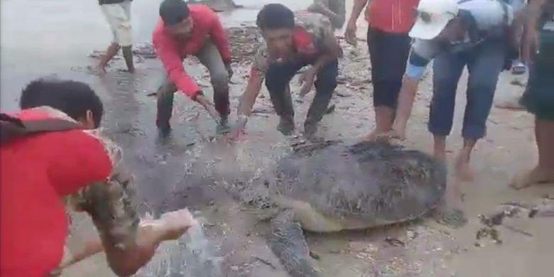 Petugas BKSDA Bengkulu-Lampung lepasliarkan penyu yang terdampar pasca-tsunami di Lampung Selatan, Selasa (25/12/2018).
