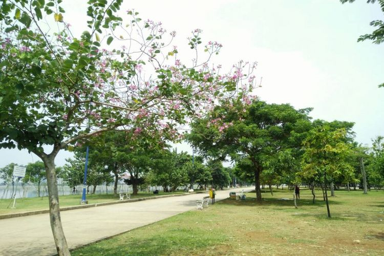 Lintasan jogging yang diperindah dengan pohon rindang membuat suasana Taman Waduk Pluit begitu nyaman.