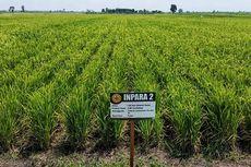 Kunci Sukses Pertanian di Lahan Rawa Adalah Tata Kelola Irigasi