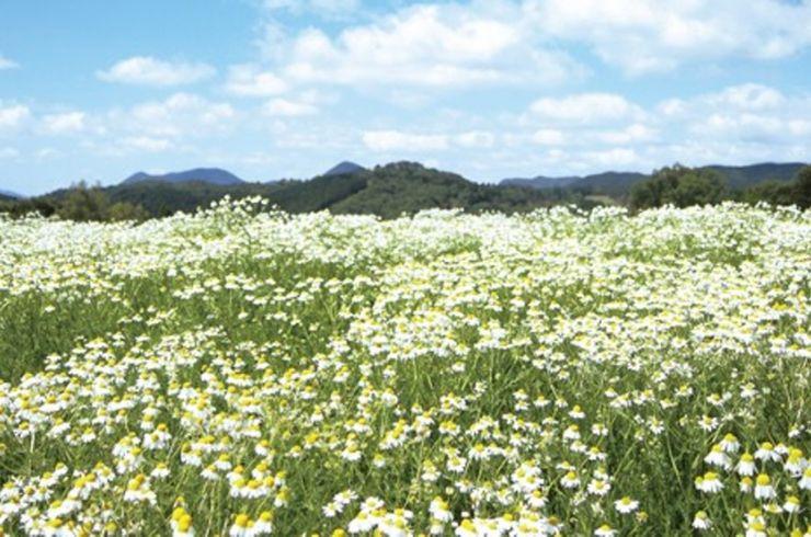 Ini Destinasi Rekomendasi untuk Liburan Musim Panas di Jepang