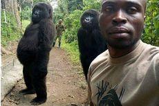 Begini Gaya Dua Gorila Saat Berfoto dengan Penjaga Taman Nasional