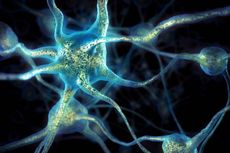 Peneliti Ungkap Hubungan antara Autisme dan Epilepsi
