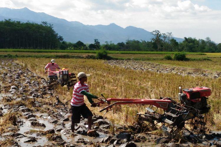 Kabupaten Bondowoso, Jawa Timur, memiliki komoditas andalan pertanian yaitu kopi Arabica Java Ijen Raung dan padi organik.