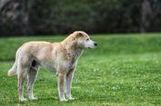 Seekor Anjing Tinggal Sendirian di Taman Selama 13 Tahun
