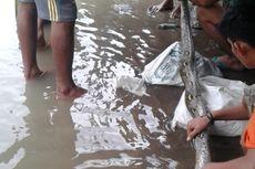 Warga di Banyuasin Tangkap 5 Ular Piton, 4 di Antaranya Dibunuh