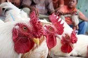Perjalanan Panjang Opor Ayam dan Ketupat Lebaran