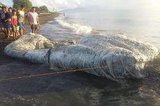 Makhluk Misterius Raksasa Terdampar di Pantai Filipina, Apa Itu?