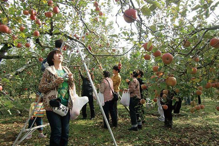 Habiskan liburan akhir pekan spesial kamu di kebun apel.
