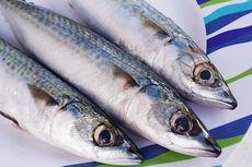 Peneliti LIPI: Tak Mengagetkan Ikan Makarel Terinfeksi Cacing Parasit