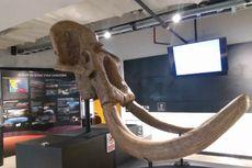 Koleksi Museum Geologi Hadir di Jakarta