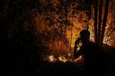 Fakta Karhutla di Riau: Semakin Parah hingga Angin Kencang Sulitkan Petugas