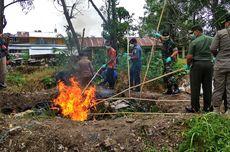 Balai Karantina Nunukan Musnahkan 2,5 Ton Daging Ilegal dari Malaysia