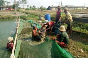 Penghasilan Rp 100-an Juta Per Hari, Kisah Juragan Lele di Indramayu