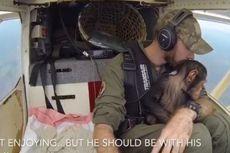 Pilot Ini Selamatkan Bayi Simpanse yang Yatim Piatu