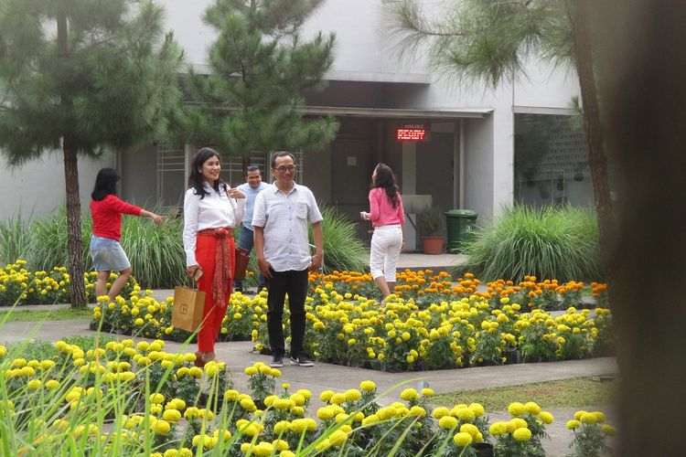 Cantiknya taman marigold Rumah Atsiri Indonesia