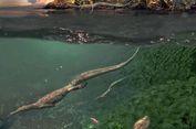 Bukti Baru, Reptil Laut Tertua Habiskan Masa Tua di Daratan