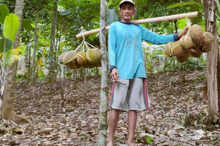 Pak Jali memikul Durian Rumpin untuk dibawa menuruni bukit.