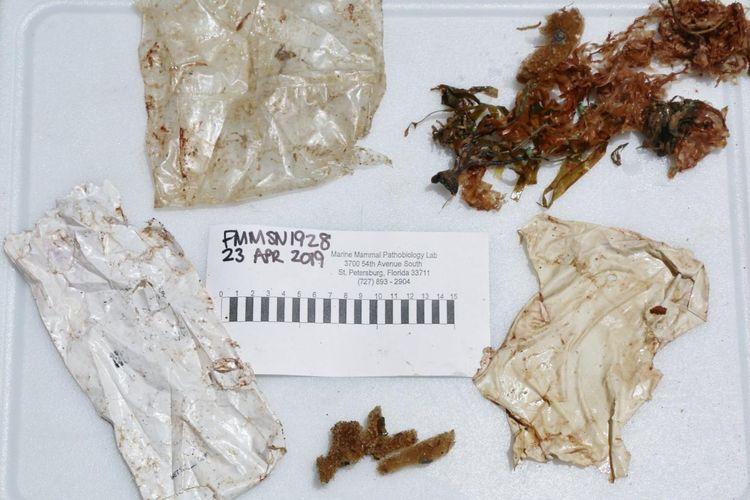 Sampah dalam perut bayi lumba-lumba yang terdampar di Florida