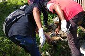 6 Fakta Wabah Anjing Rabies di NTB, Enam Meninggal di Dompu hingga Ciri Manusia dan Anjing Terjangkit Rabies