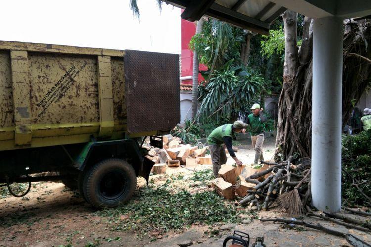 Pohon beringin yang diperkirakan berusia 30 tahun di pekarangan rumah seniman sekaligus pengusaha Salahuddin Setiawan Djodi Nur Hadiningrat atau lebih dikenal sebagai Setiawan Djody tumbang. Hingga hari ini, Selasa (14/11/2017) pemotongan pohon masih dilakukan.