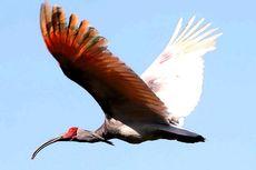 Dianggap Punah, Burung Ini Kembali Terbang di Korsel 40 Tahun Kemudian