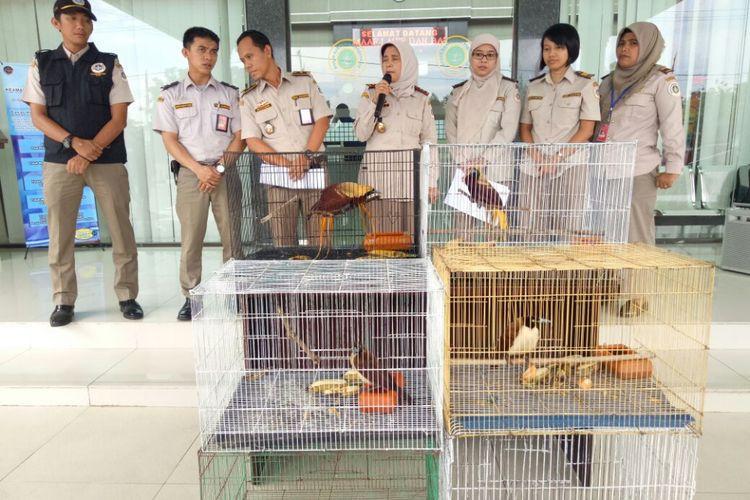 Empat ekor Burung Cendrawasih disita petugas Balai Karantina Pertanian di Bandara Kualanamu Sumatera Utara, Kamis (10/8/2017).