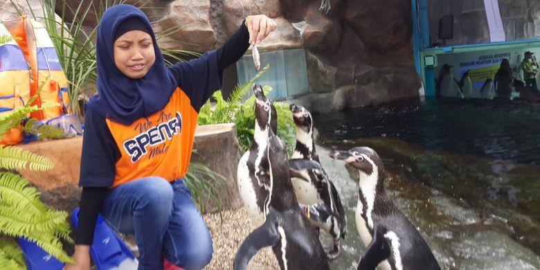 Salah satu pengunjung saat memberi makan penguin di Eco Green Park, Kota Batu, Rabu (25/4/2018).