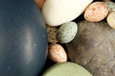 Bukan Barang Baru, Warna-warni Telur Sudah Ada Sejak Zaman Dinosaurus