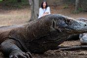 Bolehkah Perempuan yang Sedang Menstruasi Mengunjungi Habitat Komodo?
