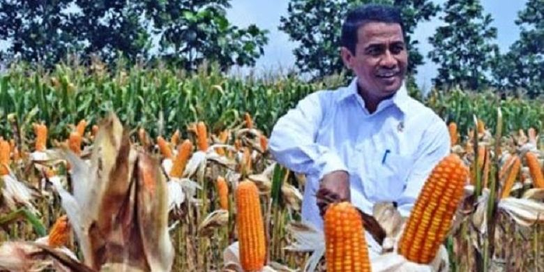 Mentan Amran sumringah melihat petani jagung panen raya