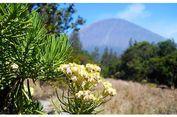 5 Gunung di Indonesia dengan Hamparan Edelweis Indah
