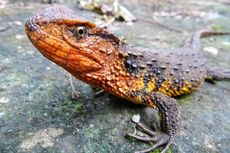 Bukti Kekayaan Hayati, 115 Spesies Baru Ditemukan di Asia Tenggara