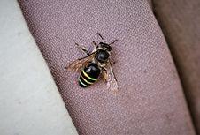 Cabut Rumput, Mata Perempuan Taiwan 'Kelilipan' 4 Lebah Hidup