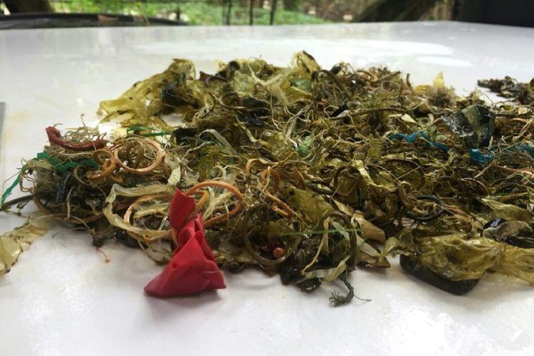 Karet dan sampah plastik yang ditemukan dalam usus penyu hijau