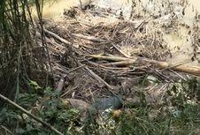 Mayat Perempuan Membusuk di Sungai Bukan Korban Pembunuhan