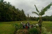 Ambo Tang Tewas Tertimpa Pohon Kelapa yang Tumbang Disapu Angin Kencang