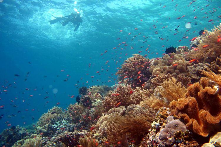 Perairan Alor, Nusa Tenggara Timur.