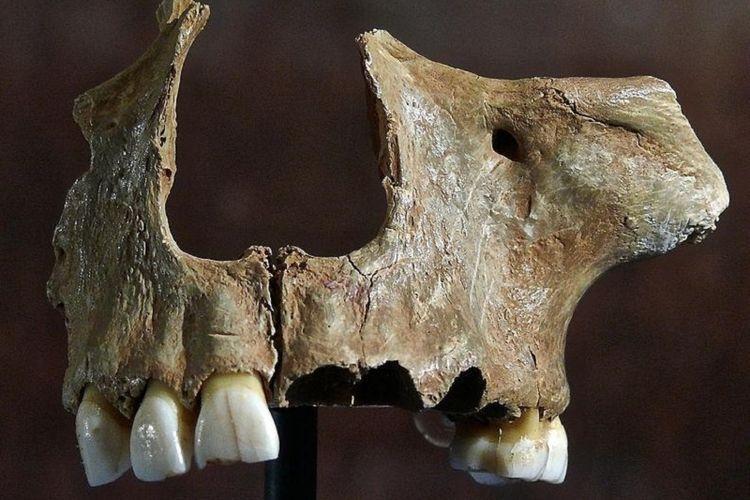 Tengkorak korban kanibalisme yang ditemukan di gua Gough.