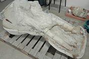 Fosil Langka Leluhur Gajah dengan Empat Gading Ditemukan di Perancis