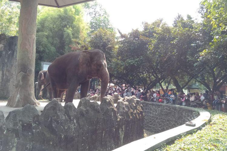 Wahana Gajah di Taman Margasatwa Ragunan, Kamis (6/6/2019)