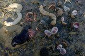Biota Laut Mati akibat Tumpahan Minyak Sawit Mentah di Buton Selatan