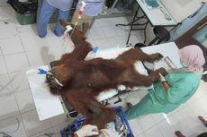 Mahasiswa Gelar Aksi Kutuk Penembakan Orangutan Hope
