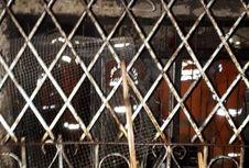 Kebakaran di Pademangan, 3 Orang Tewas di Rumah Berteralis Besi