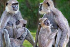 5 Ekspresi 'Manusiawi' yang Juga Dimiliki Hewan