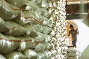 Tahun Ini Indonesia Surplus Beras 2,85 Juta Ton, Ini Kata Pengamat...