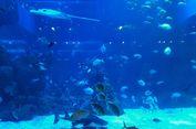 Mau Diskon Tiket Masuk Jakarta Aquarium? Ini Syaratnya