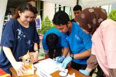 Antisipasi Pencurian dan Rabies, 100 Anjing di Jaksel Dipasangi Mikrocip