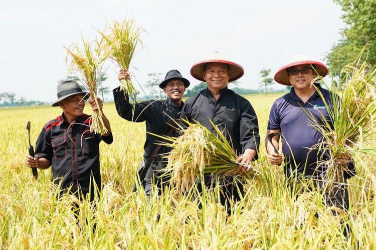 Calon Gubernur Jawa Barat nomor urut 2 Tubagus Hasanuddin atau akrab disapa Kang Hasan menemui para petani di Indramayu dan ikut serta memanen padi (ngarit) di sawah bersama para petani.