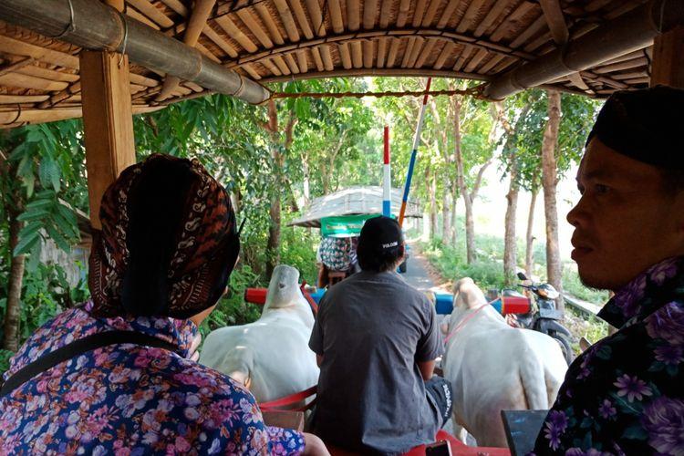 Serunya Naik Gerobak Sapi Keliling Desa Melintas Sawah di Sleman